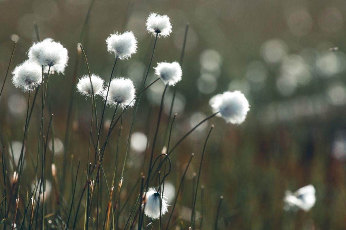 Flora, funghi e fauna