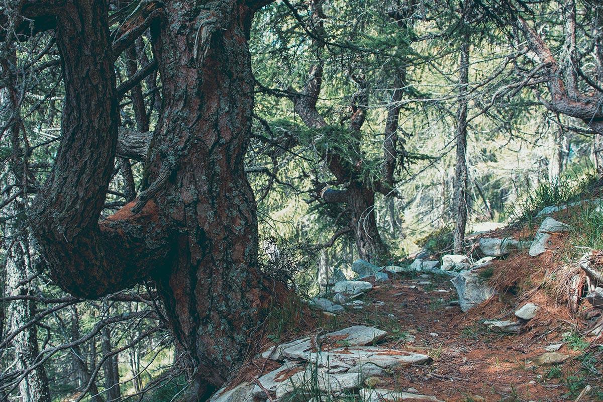 Riserva forestale